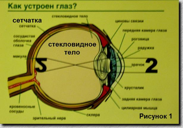 лечение ретинопатии недоношенных в швейцарии:
